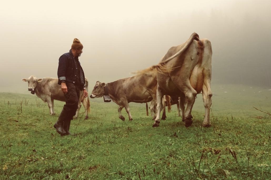 Beim Käser auf der Alp Risch | Magazin Zürich