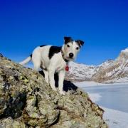 Skip - mein Jack Russel Terrier